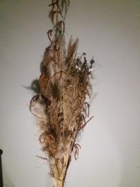 grote bundel siergrassen,pluimen, katjestakken e.d.
