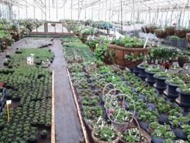 losse planten