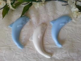 Dolfijn groot