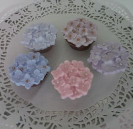 cup-cake hortensia