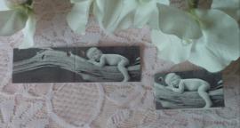 labeltje geboorte