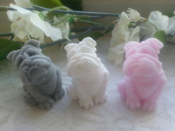 Hond - Buldog klein