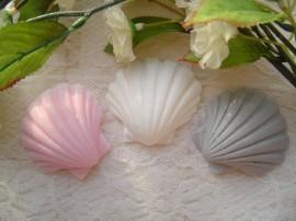 shellschelp.jpg