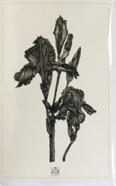 Anna Feer wenskaart  - Iris