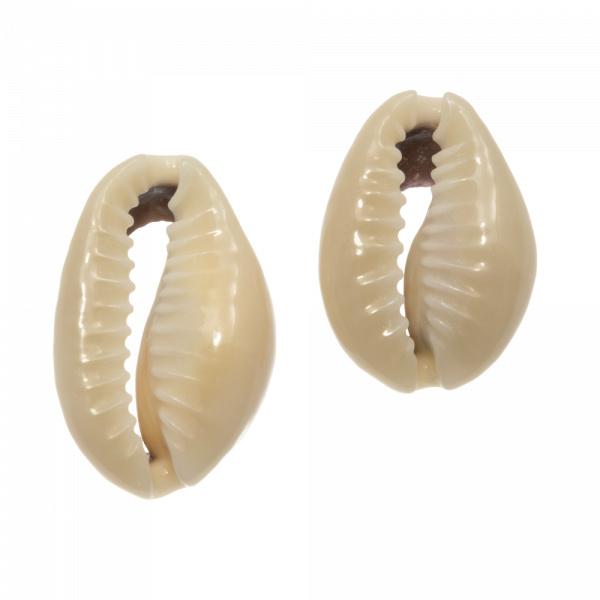 Kauri schelp kralen dark khaki 13-20mm 5 stuks 2865