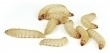 Wasmotten ( 25 gram  ) Standaard bakje