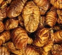 Gedroogde Zijderupsen 50 gram