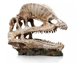 Giganterra dino skull ( 19cm x 9cm x 14cm ) G004-00335 )