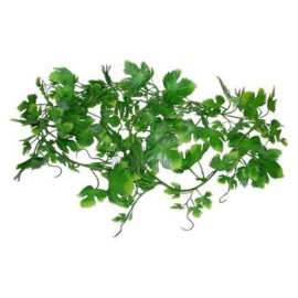 Lucky Reptile Gape Leaf Vine