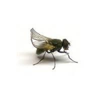 Krulvliegen ca 100 stuks