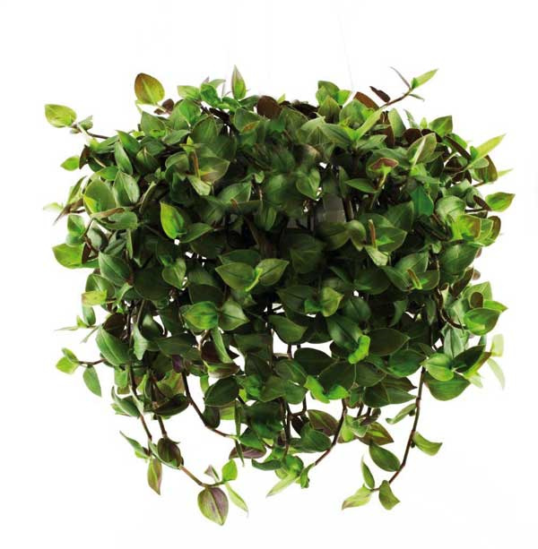 Golliwoog®  hangplant  groot