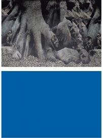 Superfish deco poster 4, 60x49 cm