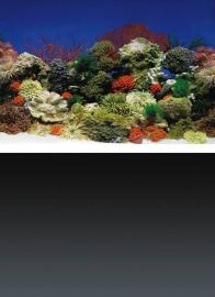 Superfish deco poster 1, 100x49 cm