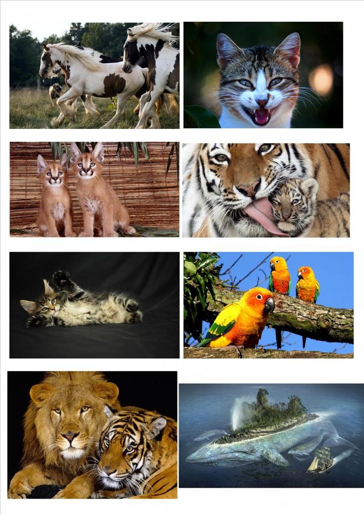 dierenvoorbeeld.jpg