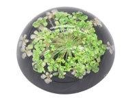 Resin cabochon droogbloemetjes groen