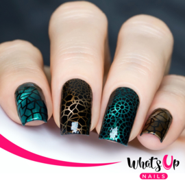 Whats Up Nails - Stamping Plate - B013 Glass Masterpiece