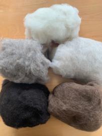Bergschaap in vlies 5 natuurkleure,  ecru, licht en donker beige, bruin en natuur zwart  50 gram, totaal 250gram