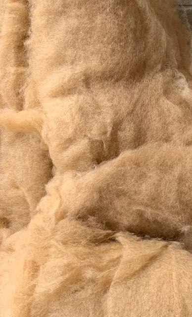 Bergschaap in vlies, kameel
