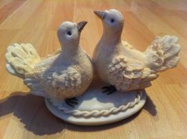 duifstel duif duiven