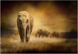 246 Woestijn Olifanten in de Namibwoestijn Vliesbehang  300x210 met gratis behanglijm