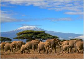 029 Kilimanjaro olifanten kudde Behang 300x210 Fotobehang
