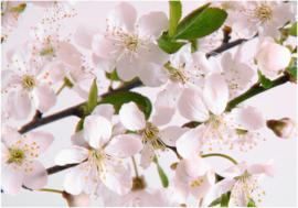 Bos Bloemen & Planten