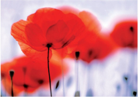 012 MAGICAL POPPIES 400x280 fotobehang met lijm