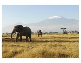 081 KILIMANJARO ELEPHANTS 400x280 Afrika Olifant Savanne Natuur fotobehang met lijm