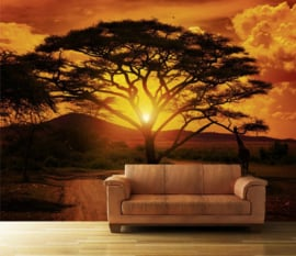 001 African Sunset Behang 400x280 Savanne Landschap Fotobehang