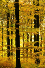 Onsfotobehang Fotobehang AB1147 Bos/Bomen/Natuur