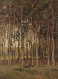 Painted Memories 2 Fotobehang 8040 Autumn Forrest/Natuur/Bomen/Bos Dutch Wallcoverings