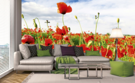 Dimex Fotobehang Red Poppies MS-5-0090 Rode Klaprozen/Natuur/Bloemen