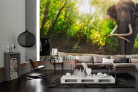 AS Creation Wallpaper XXL3 Fotobehang 470607XL Elephant in River/Natuur/Dieren