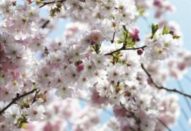 Komar Stories 8-507 Spring/Bloesem/Planten/Natuur Fotobehang - Noordwand