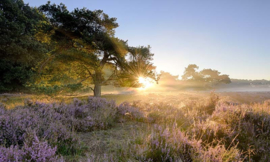 We Live by Light/Holland Ederheide zonsopgang 2152 - Fotobehang - Noordwand