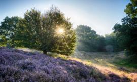 We Live by Light/Holland Posbank zonsopgang 2 1865 -Fotobehang  - Noordwand