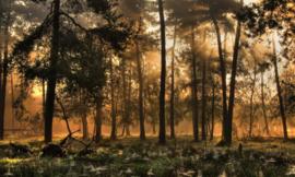 We Live by Light/Holland Herfstochtend 0224 - Fotobehang - Noordwand