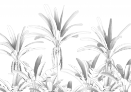 Noordwand Komar Raw Fotobehang R4-051 Musa/Bomen/Bananenboom/Botanisch/Natuurlijk