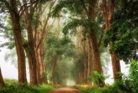 AS Creation AP Digital4 Behang  DD109226 Acacias The Mist/Natuur/Bomen/Bos Fotobehang