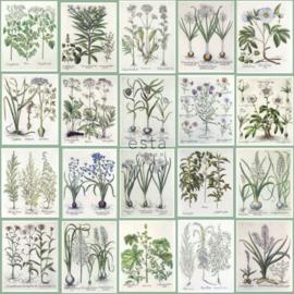 Esta Home Greenhouse Behang 158826 Botanisch/Planten/Bladeren Fotobehang