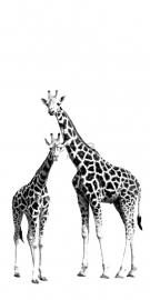 Esta Home XL Photowalls For Kids Fotobehang 158701 Dieren/Giraffe/Giraf/Kinderkamer
