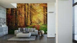 AS Creation Wallpaper XXL3  Fotobehang 470646XL Autumn Forest/Natuur/Herfst