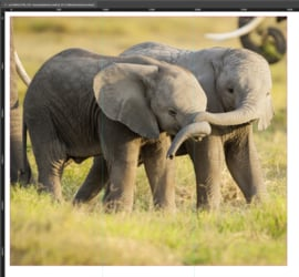 AS Creation AP Digital 2 Fotobehang 471501 Kenya/Little Elephants/Dieren/Natuur