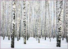 AS Creation XXL Wallpaper 3 Fotobehang 470652 Birch in Winter/Berkenbomen/Natuur/Bomen/Landelijk/Natuurlijk/Modern