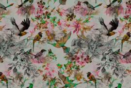 AS Creation Living Walls by Patel Fotobehang DD110177 Funky Birds 1/Botanisch/Vogels Behang