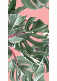 Kek Amsterdam Botanical leaves Pink 2d Fotobehang WP-581 Bladeren/Botanisch/Monstera/Roze