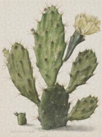 Painted Memories Blooming Cactus 8013 Behang - Dutch Wallcoverings