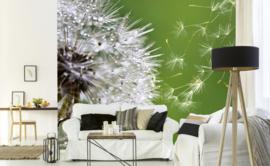 Dimex Fotobehang Blowing Dandelion MS-5-0121 Paardebloem/Bloem/Natuur/Botanisch