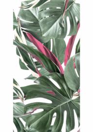 Kek Amsterdam Botanical Leaves White 2D Fotobehang WP-582 Bladeren/Botanisch/Monstera/Wit