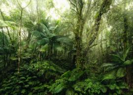 Komar Home Imagine Edition 4 Fotobehang X7-1009 Mindfulness/Botanisch/Bladeren/Natuurlijk